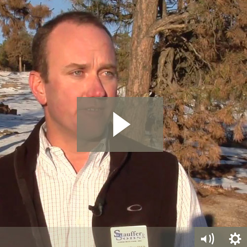 Video: Stauffer & Sons on FOX21 News (Black Forest Fire, Six Months Later)