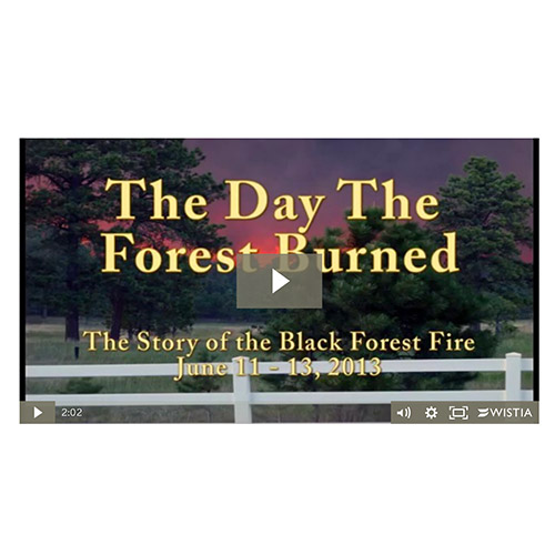 """The Day The Forest Burned"" DVD for Sale"